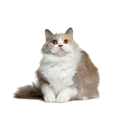 Вет. диета для кошек