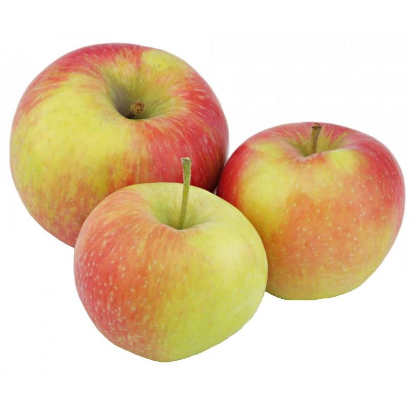 Яблоки сезонные свежие весовые, средний вес 1, 2 кг