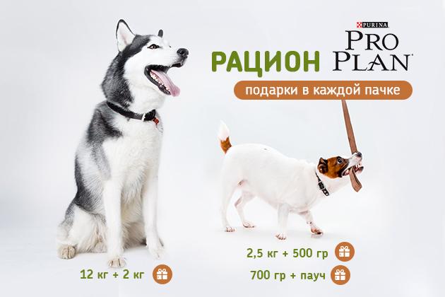Купи Pro Plan для Собак и получи корм в Подарок!