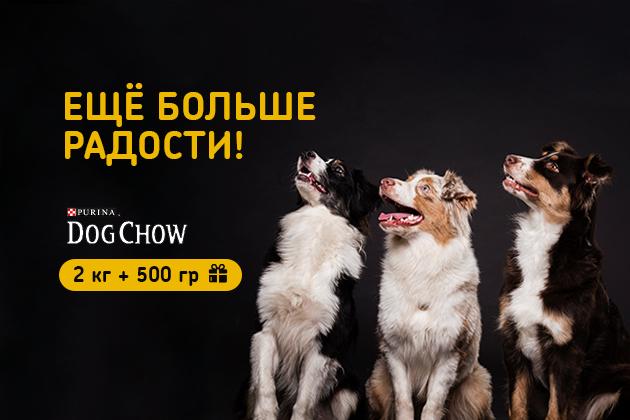 Купи корм для собак Dog Chow и получи корм в подарок!